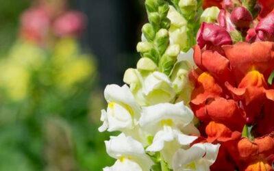 Miscele floreali californiane