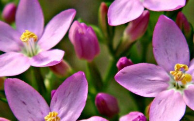 Miscele fiori di bach
